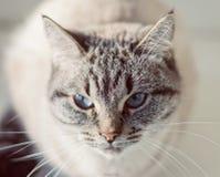 Kat op de venstervensterbank Royalty-vrije Stock Afbeelding