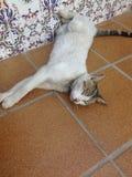 Kat op de vloer Royalty-vrije Stock Afbeelding