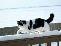 Kat op de Wandeling van de Ochtend Royalty-vrije Stock Fotografie