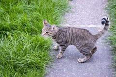Kat op de weg Stock Foto