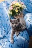 Kat op een blauwe bank stock foto's