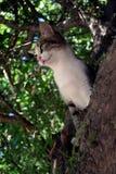 Kat op een boom Royalty-vrije Stock Afbeelding