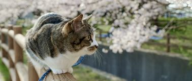 Cat with green eyes sitting on a tree trunk stock images