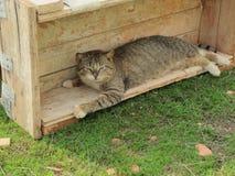 Kat op een bouwwerf Stock Fotografie