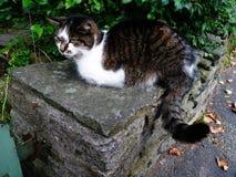 Kat op een droge steenmuur met poort Stock Afbeelding