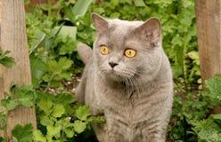 Kat op een gang. Stock Afbeelding