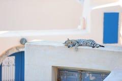 Kat op een Grieks eiland Santorini Stock Afbeeldingen