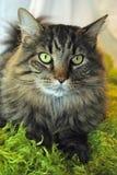Kat op een Groene Pluizig lakendeken Royalty-vrije Stock Foto's