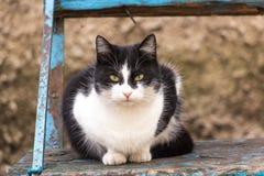Kat op een houten bank Stock Foto's