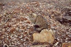 Kat op een houten stomp Stock Foto's