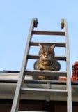 Kat op een ladder stock foto's