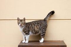 Kat op een lijst stock foto's