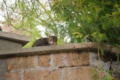 Kat op een Muur Stock Afbeeldingen