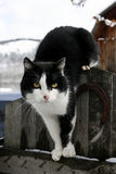 Kat op een omheining Stock Fotografie