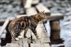 Kat op een pier op het meer Stock Foto's