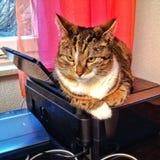 Kat op een Printer Royalty-vrije Stock Foto's
