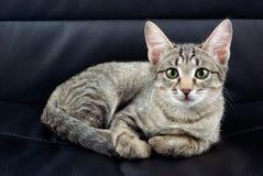 Kat op een stoel Stock Foto's