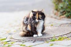 Kat op een straat in de stad, zwarte, wit en met groene ogen Stock Foto