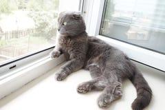 Kat op een venstervensterbank Stock Foto