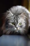 Kat op een venstervensterbank royalty-vrije stock fotografie
