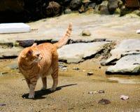 Kat op een verspild strand Stock Foto