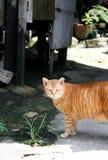Kat op een verspilde stad die aan u kijken Stock Afbeelding