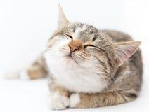 Kat op een witte achtergrond royalty-vrije stock afbeeldingen