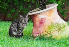 Kat op gazon stock afbeeldingen