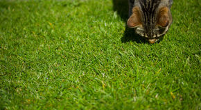 Kat op gras stock foto