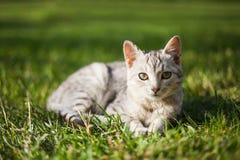 Kat op gras Royalty-vrije Stock Afbeeldingen