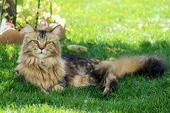 Kat op gras Stock Foto's