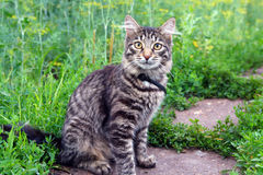 Kat op gras Stock Afbeelding