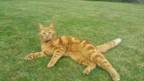 Kat op groen gras Royalty-vrije Stock Afbeeldingen