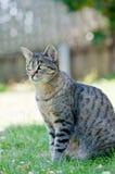 Kat op groen gras dat van de zonnige middag geniet. Royalty-vrije Stock Afbeeldingen
