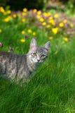 Kat op groene gras en bloem Royalty-vrije Stock Afbeelding