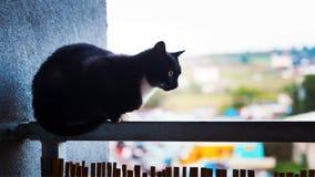 Kat op het balkon Stock Fotografie