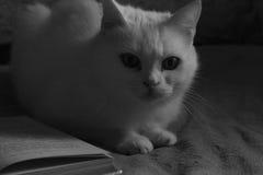 Kat op het bed Stock Afbeelding