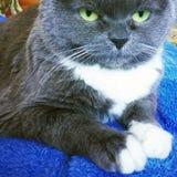 Kat op het blauwe bed Royalty-vrije Stock Foto's