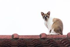 Kat op het dak Royalty-vrije Stock Foto