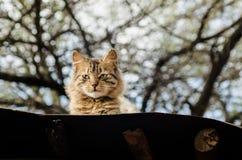 Kat op het dak stock afbeelding