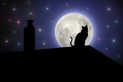 Kat op het dak bij nacht Stock Foto