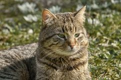 Kat op het gazon royalty-vrije stock foto's