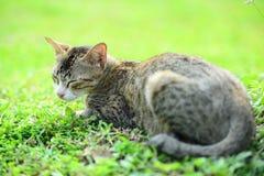 Kat op het gras Royalty-vrije Stock Afbeelding