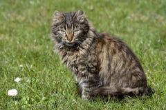 Kat op het gras Royalty-vrije Stock Fotografie