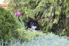 Kat op het groene bloembed Stock Afbeeldingen