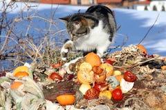 Kat op het huisvuil Royalty-vrije Stock Fotografie