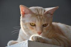 Kat op het ochtendlicht Stock Foto