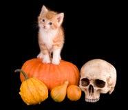 Kat op het pumpking Stock Afbeelding