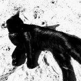 Kat op het strand stock afbeeldingen