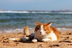 Kat op het strand Stock Foto